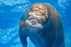 Приморский океанариум посетили пять тысяч человек