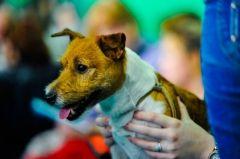 Собака четвертый день заперта в автомобиле во Владивостоке