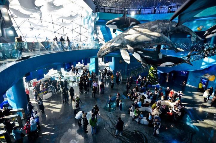 За первую неделю нового года Приморский океанариум посетили почти 14 тысяч человек