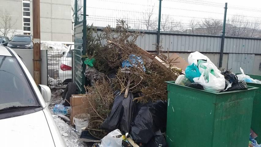 Новогодние деревья заполонили помойки Владивостока