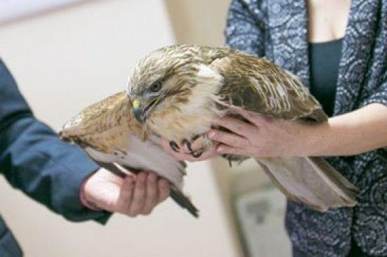 В Приморье на свалке нашли раненую птицу