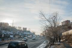 «Дерево-убийцу» во Владивостоке срубит собственник сетей связи