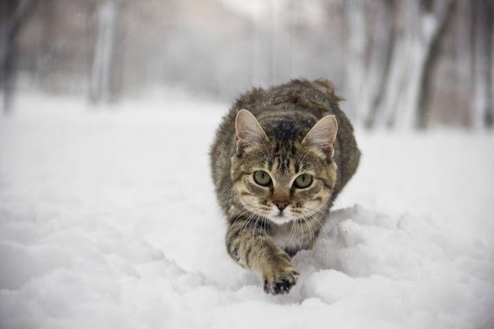 Небольшой снег пройдет в Приморье в понедельник
