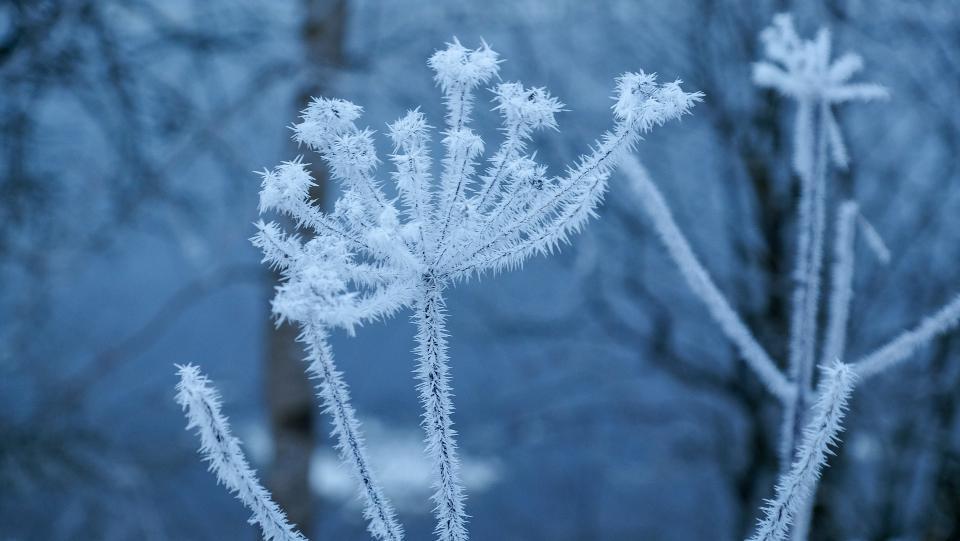 В трех районах Приморья была зафиксирована аномально низкая температура