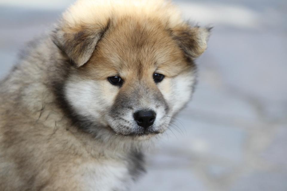 Жительницу Владивостока обманули при покупке щенка