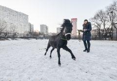 История пони, который живет в торговом центре Владивостока
