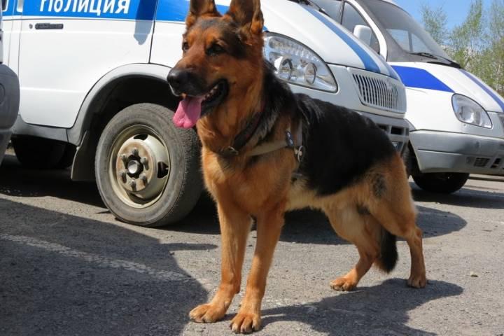 Собаки в Приморье помогли раскрыть 427 преступлений