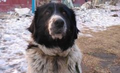 Во Владивостоке спасли обездвиженную собаку с горящего судна