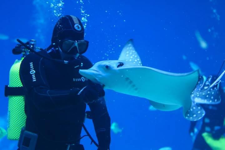 В Приморском океанариуме показали «Танцы со скатами»