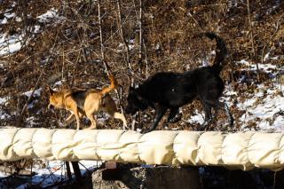 В Приморье может появиться краевое предприятие по работе с бродячими животными
