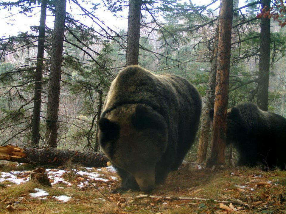 Семья из шести медведей удивила ученых в Приморье