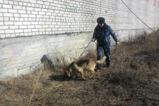 Три телефона нашла собака около исправительной колонии в Приморье