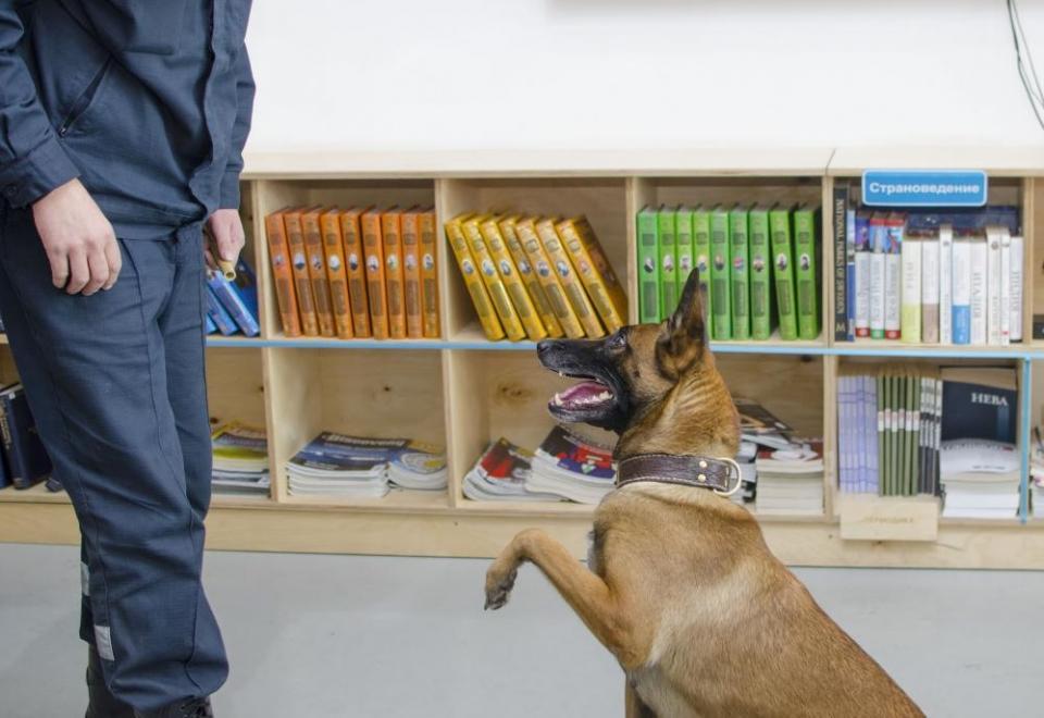 «Усы, лапы и хвост на страже России»: жителей Владивостока познакомили со служебными собаками