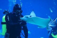 «Урок в океанариуме» могут посетить приморские дети и учителя каждую среду