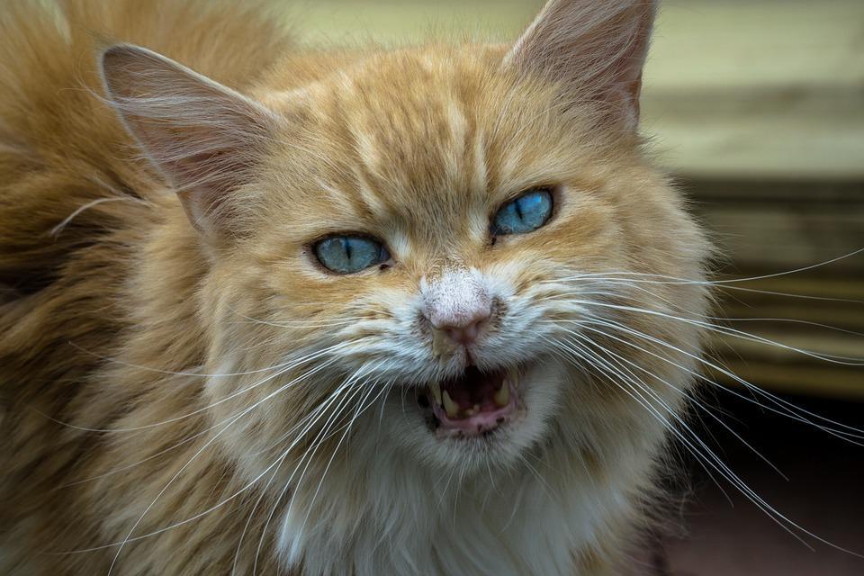 Кошки портят жизнь жильцам многоквартирного дома во Владивостоке