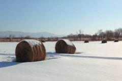 В Приморье сегодня местами небольшой снег - синоптики