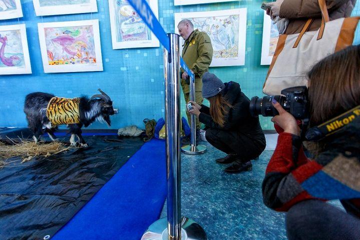 Звезда всероссийского масштаба козел Тимур встретился с фанатами