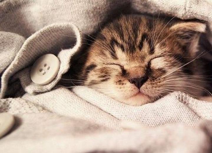 С праздником, котаны: в России отмечают День кошек