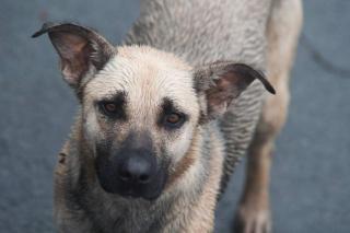Прогулка с собакой во Владивостоке закончилась очень трагично