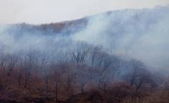 Два лесных пожара потушили в Приморье