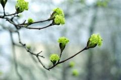 В среду жителей Приморья ожидает теплая весенняя погода