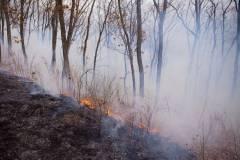 В Приморье ликвидировали все лесные пожары