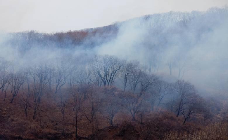 Нацпарк «Земля леопарда» охватили пожары