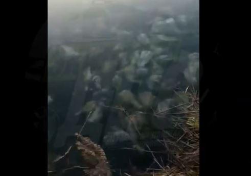«Как в фильме ужасов»: озеро, полное черепов, нашли в Приморье
