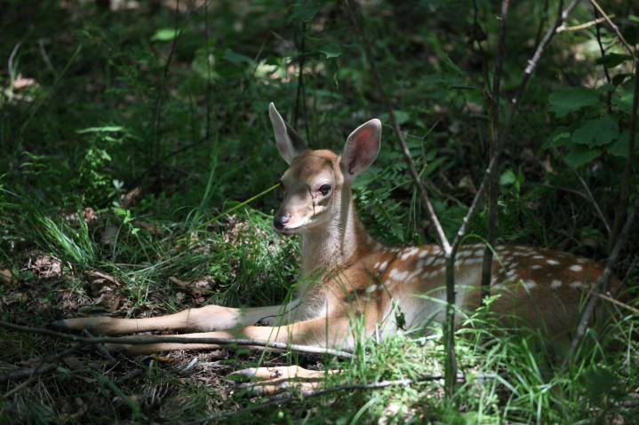 Изъятых у браконьеров в России животных предложили передавать в дар