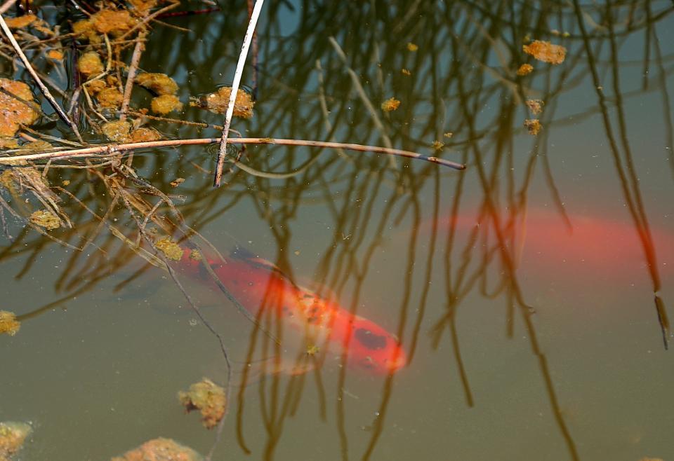 В прудах прогулочной зоны в Приморском океанариуме проснулись рыбы