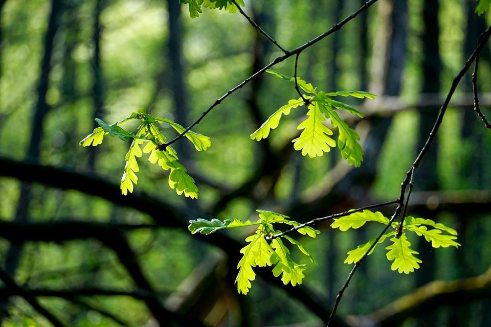 Будьте осторожны: в Приморье начался сезон клещей