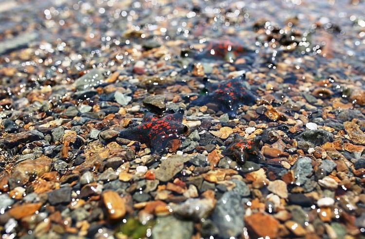 Во Владивостоке состоится акция по очистке одного из пляжей бухты Новик