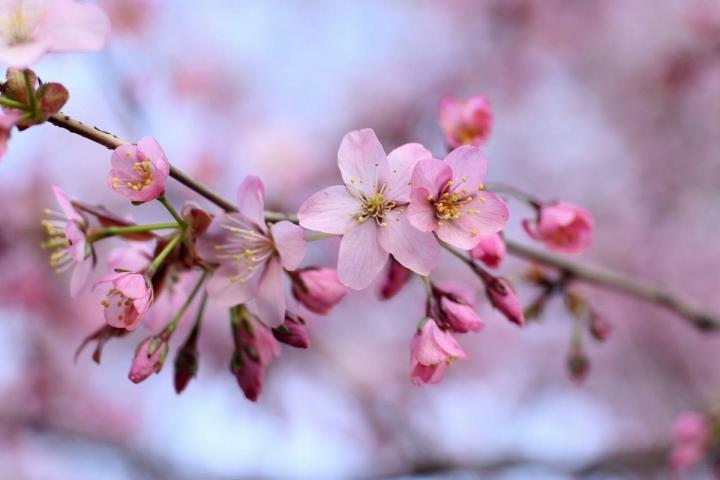 Японский центр приглашает приморцев на языковые курсы
