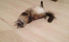 Больные и измученные кошки пропали из «концлагеря» во Владивостоке
