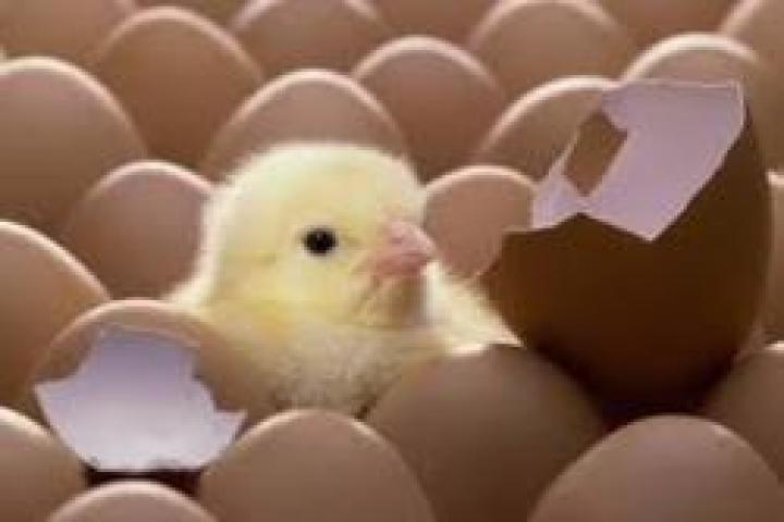 Просроченные яйца изъяли в одном из цехов Владивостока