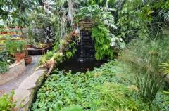 Цветы, черепахи и птицы: что можно увидеть в оранжерее Ботанического сада