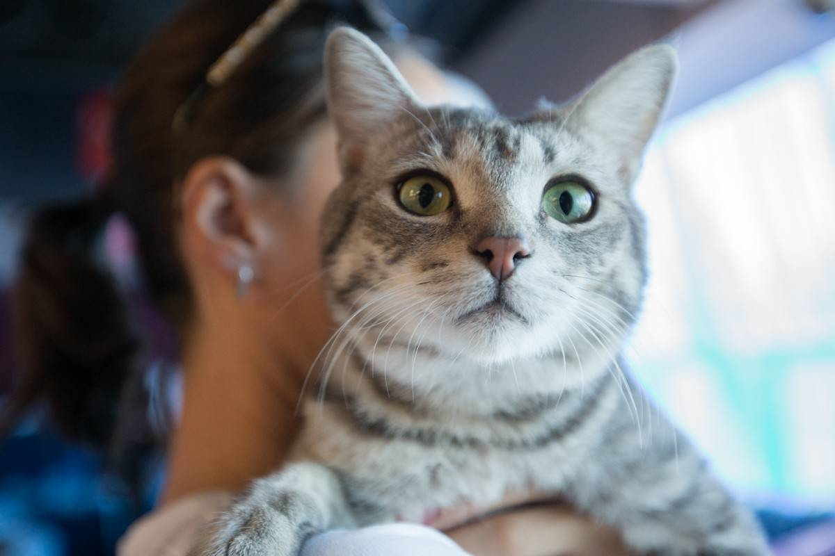 Выставка беспородных кошек прошла во Владивостоке