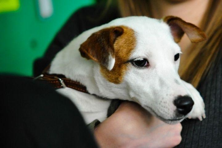Во Владивостоке гастарбайтер украл на улице собаку у горожанки