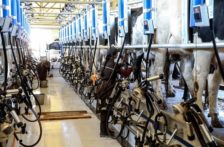 Почти 200 высокоудойных коров прилетели в Приморье