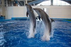 Дельфины из Приморского океанариума продемонстрировали новый талант