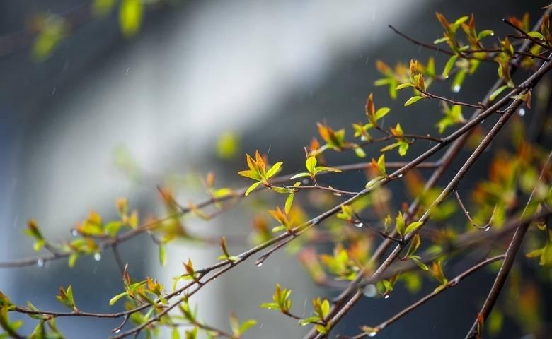 Предстоящей ночью в Приморье пройдут дожди с грозами