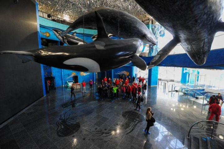 Приморский океанариум заказал вооруженную охрану за 50 млн рублей
