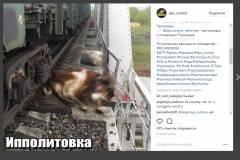 В селе Ипполитовка коровы помешали движению поезда