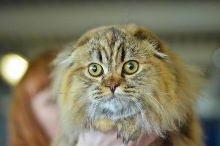 Умный и вежливый кот удивил водителей Владивостока