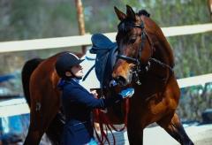 Во Владивостоке пройдет первенство по конному спорту
