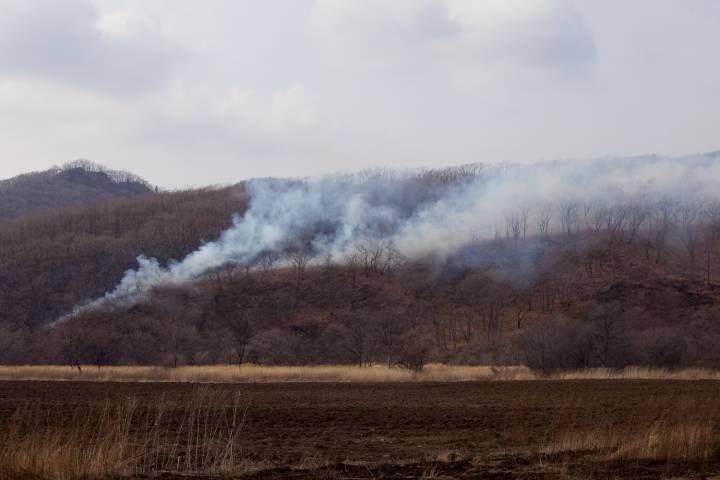 В Приморье зарегистрировано шесть лесных пожаров