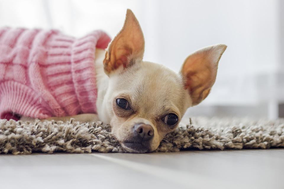 Одежда для собак стала добычей воров во Владивостоке