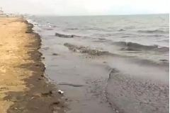 В Приморье водоросли приняли за разлив нефти
