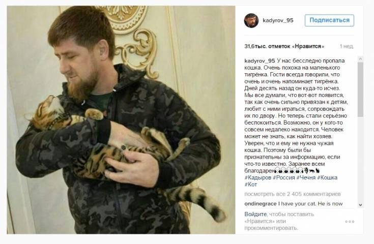 Пропавшего кота Рамзана Кадырова «видели» во Владивостоке