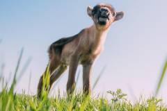 Северному олененку из зоопарка «Чудесный» выбрали имя